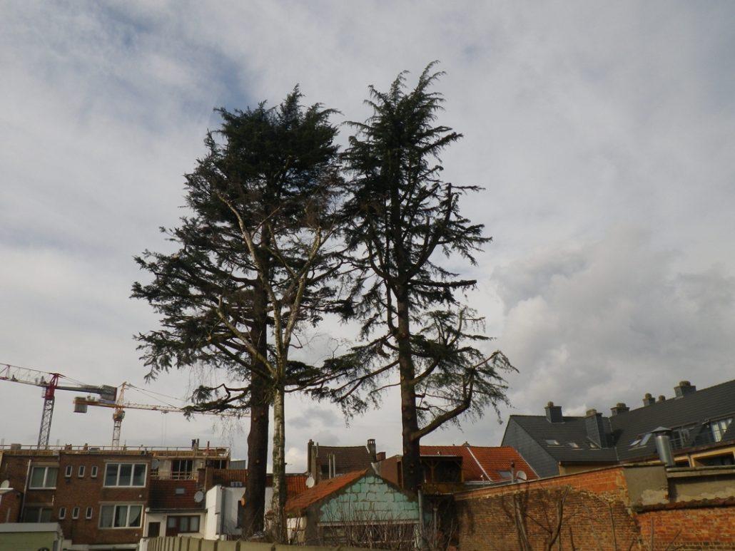 Deux-arbres-centre-ville