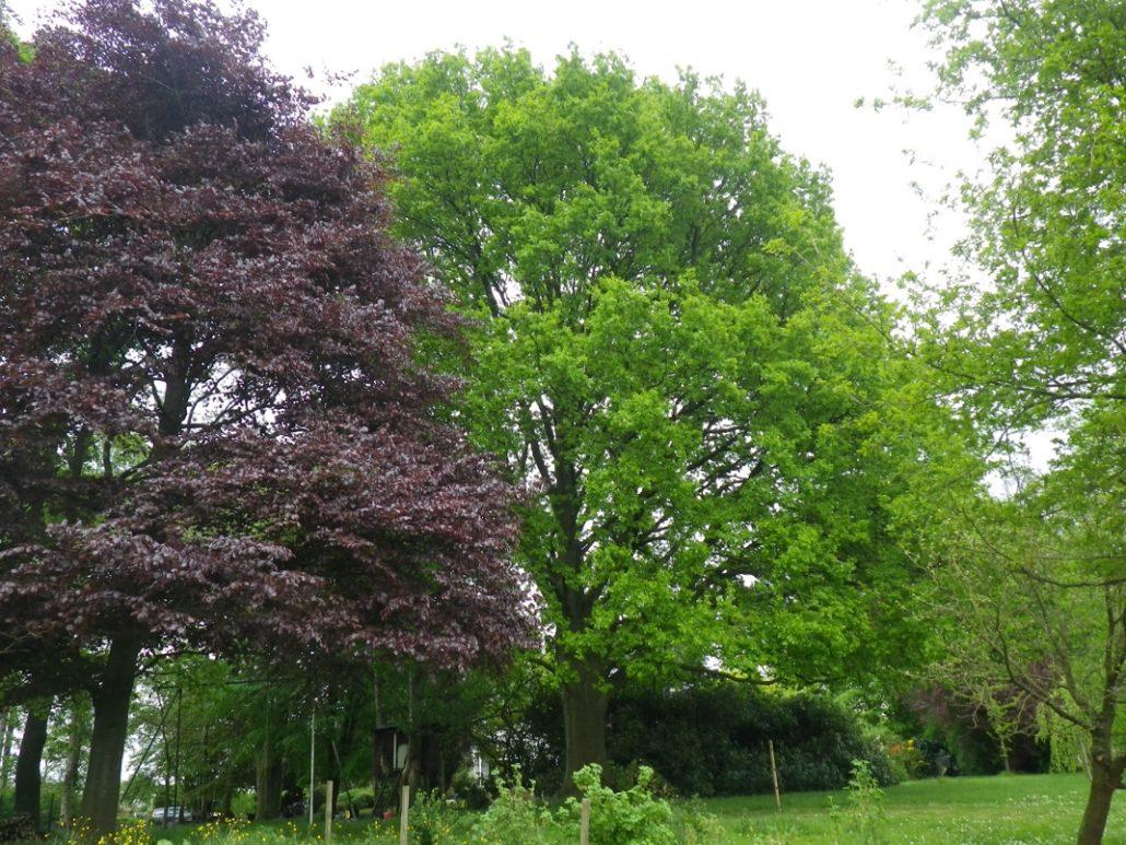 Deux-arbres-jardin